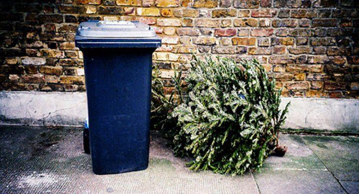 節日後處理聖誕樹須知 各市政部門提供協助莫亂棄